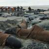 In forte aumento i cetacei spiaggiati