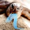 Stop all'uso dei sacchetti di plastica