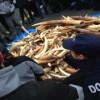 L'UE lotta contro il traffico illegale di specie selvatiche