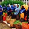 Storia e produzione del tè sull'isola dello Sri Lanka
