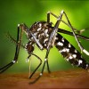 Il virus Zika sbarca in Europa