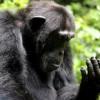 Siamo noi gli unici animali che capiscono l'ignoranza?