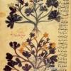 Testi arabo-persiani, del 13° secolo, in formato elettronico