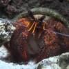 Prove d'ingestione di plastica negli animali degli abissi