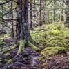 Il potenziale energetico del legno in Europa