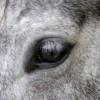 I cavalli leggono le emozioni umane