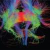 Ci guida il corpo o la mente?