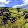 Le radici delle piante ispirano sensori 3D per esplorare il suolo
