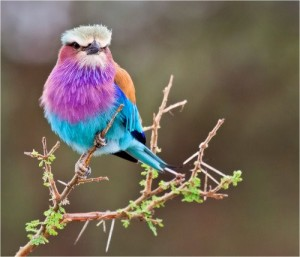 uccellino imprigionato