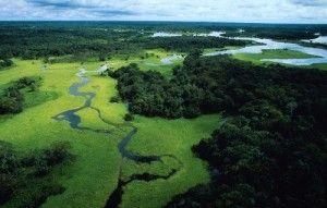 il-polmone-verde-della-terra