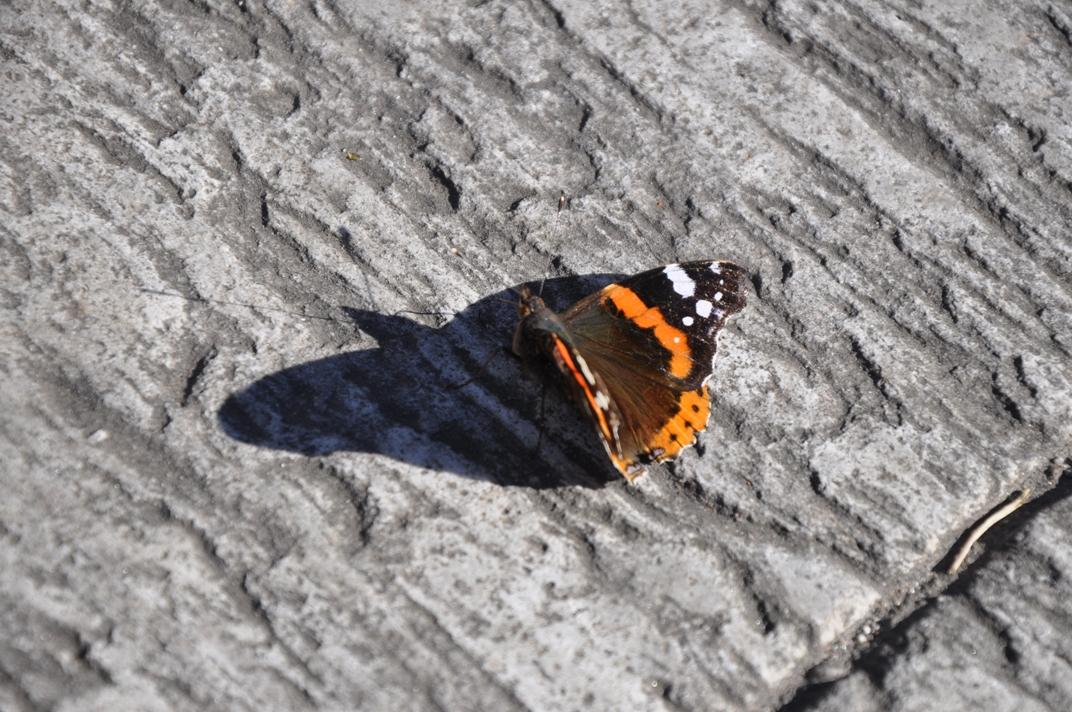 farfalla_bassa