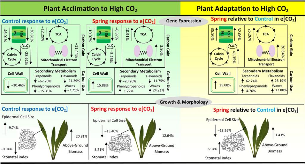 piante si adattano co2