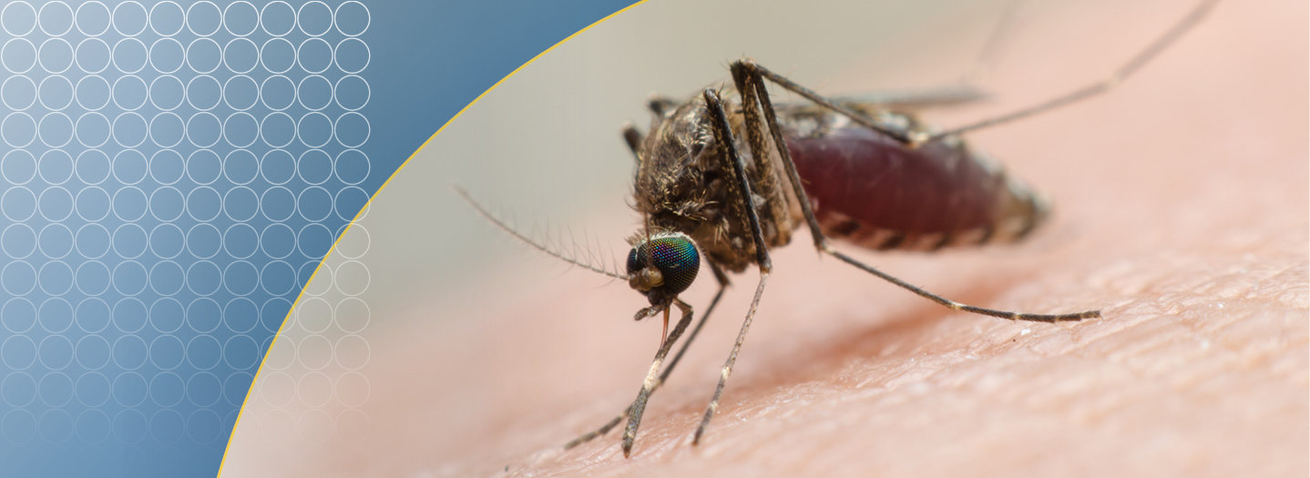 Malaria_3