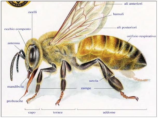 Screenshot_2021-04-11 IL MONDO DELLE API definitivo pptx - il-mondo-delle-api-definiti pdf