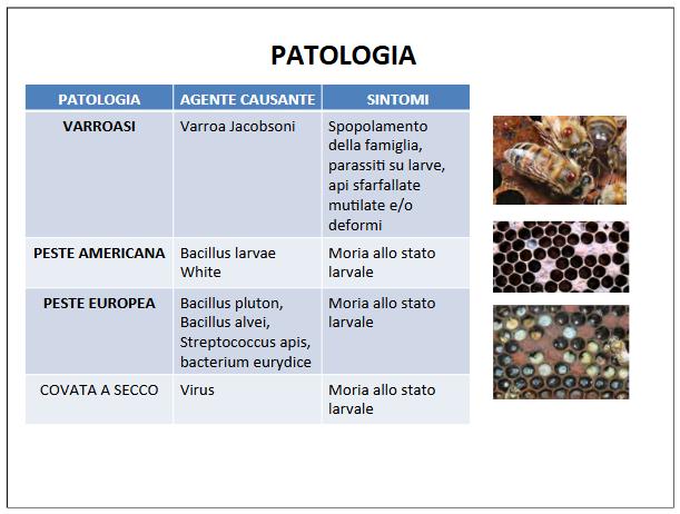 Screenshot_2021-04-11 IL MONDO DELLE API definitivo pptx - il-mondo-delle-api-definiti pdf(4)