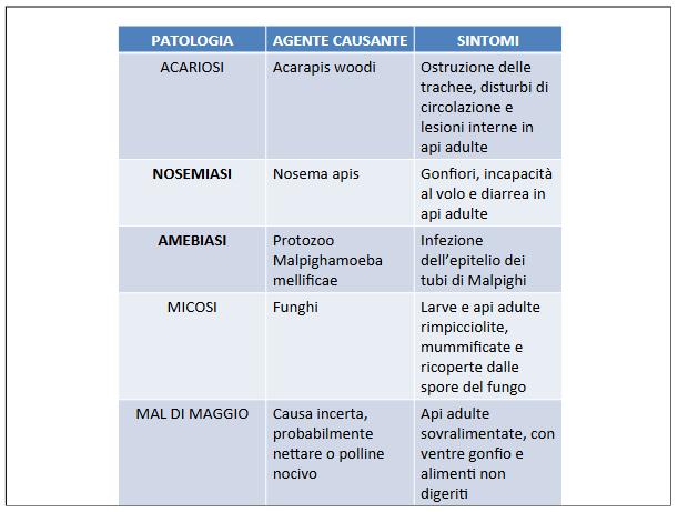 Screenshot_2021-04-11 IL MONDO DELLE API definitivo pptx - il-mondo-delle-api-definiti pdf(5)