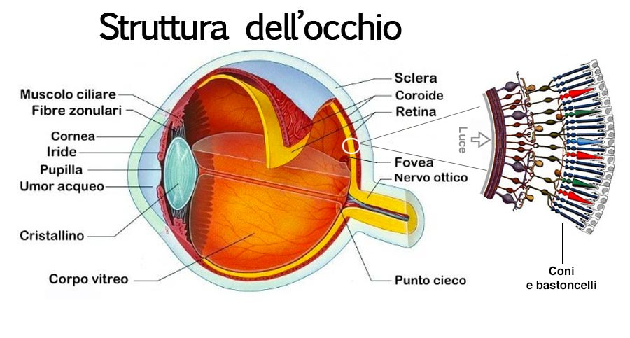 retina_luce